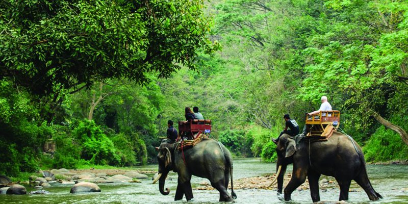 jungle safari on elephant in jim corbett national park