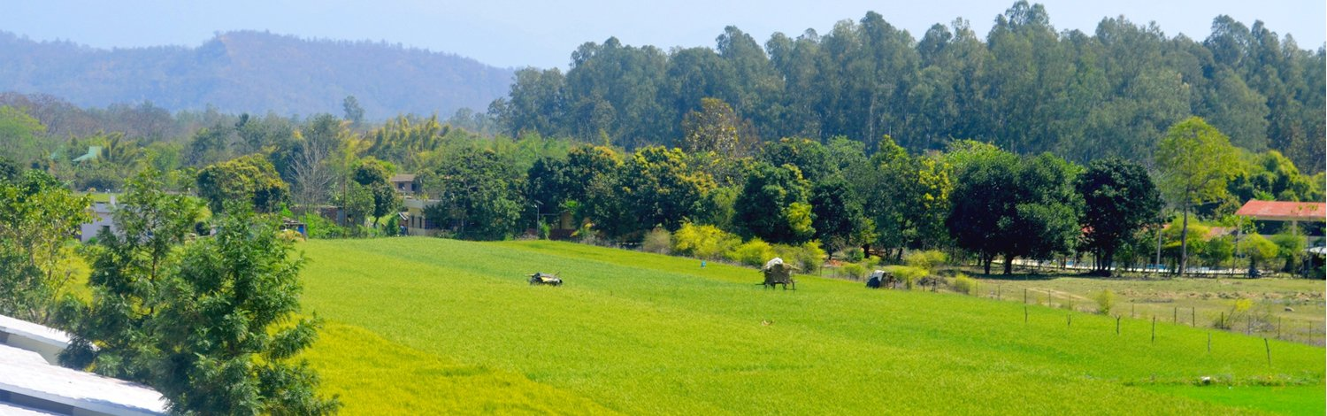 View of Corbett national park from resort