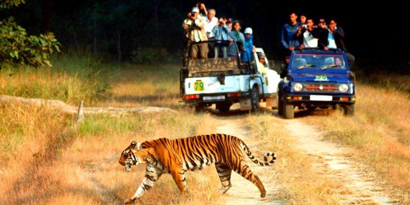 best zone for tiger sighting in jim corbett